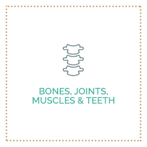 Bones, Joints, Muscles & Teeth
