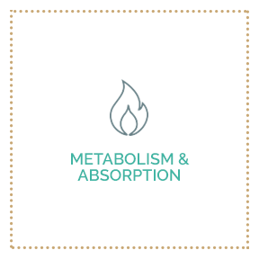 Metabolism & Absorption