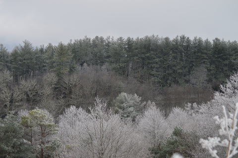Max Patch Ice Storm
