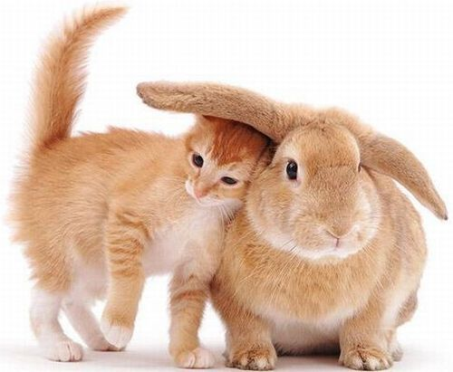 cat and bunny 11-7-2014