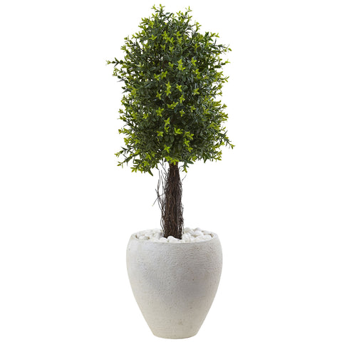 Ixora Topiary with White Planter UV Resistant - Indoor/Outdoor