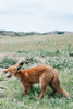 Photographic Print - Fox - Society of Wanderers - Greenhouse Interiors - 3