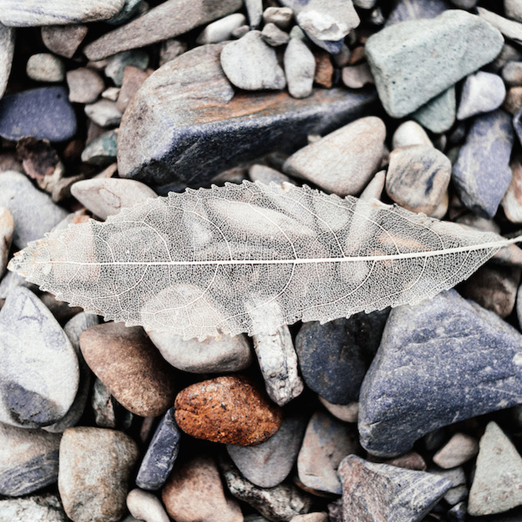 Photographic Print - Leaf + Stone - Society of Wanderers - Greenhouse Interiors - 1