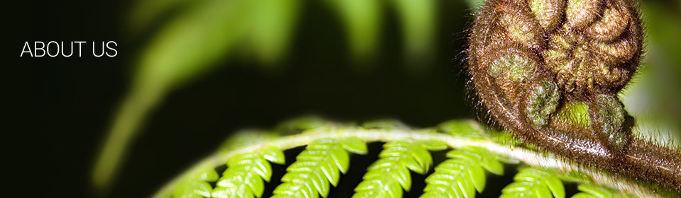 About us title header with New Zealand fern frond koru
