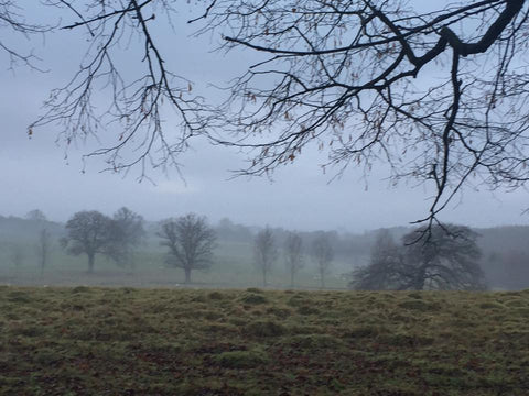 Misty Morning in Clent