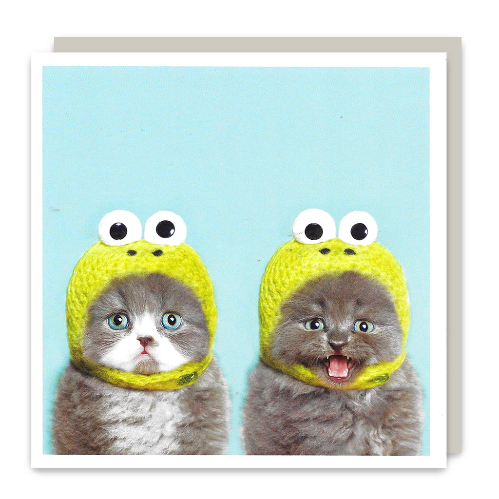 Cat Frogs