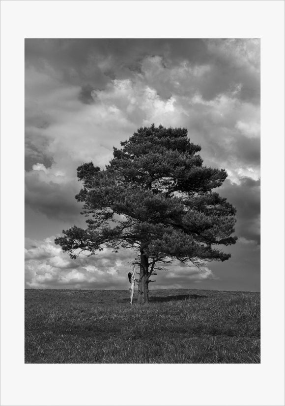 TH2014-1310 - Lone Tree, [product_type) - Thomas Holm Photography - CommandoArt.com