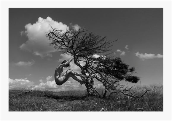 TH2014-1365 - Earth Tree, [product_type) - Thomas Holm Photography - CommandoArt.com