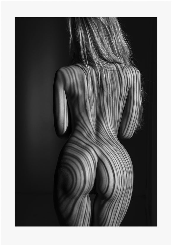 TH2015-1572 - Zebra II, [product_type) - Thomas Holm Photography - CommandoArt.com
