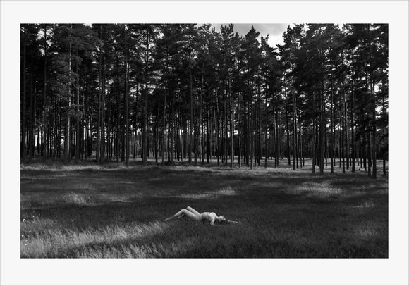 TH2015-1684 - Pine Forest, [product_type) - Thomas Holm Photography - CommandoArt.com