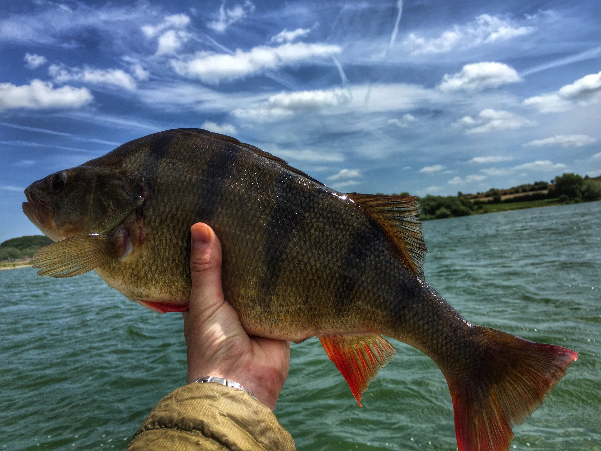 Pitsford reservoir perch