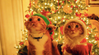 Top 3 Holiday Toxins for Cats