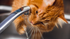 The Three Things You Didn't Know About Cats and Water