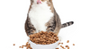 Top 7 Tips to prevent feline obesity