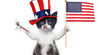 The Top Five Things Your Cat Wants You to Know this 4th of July