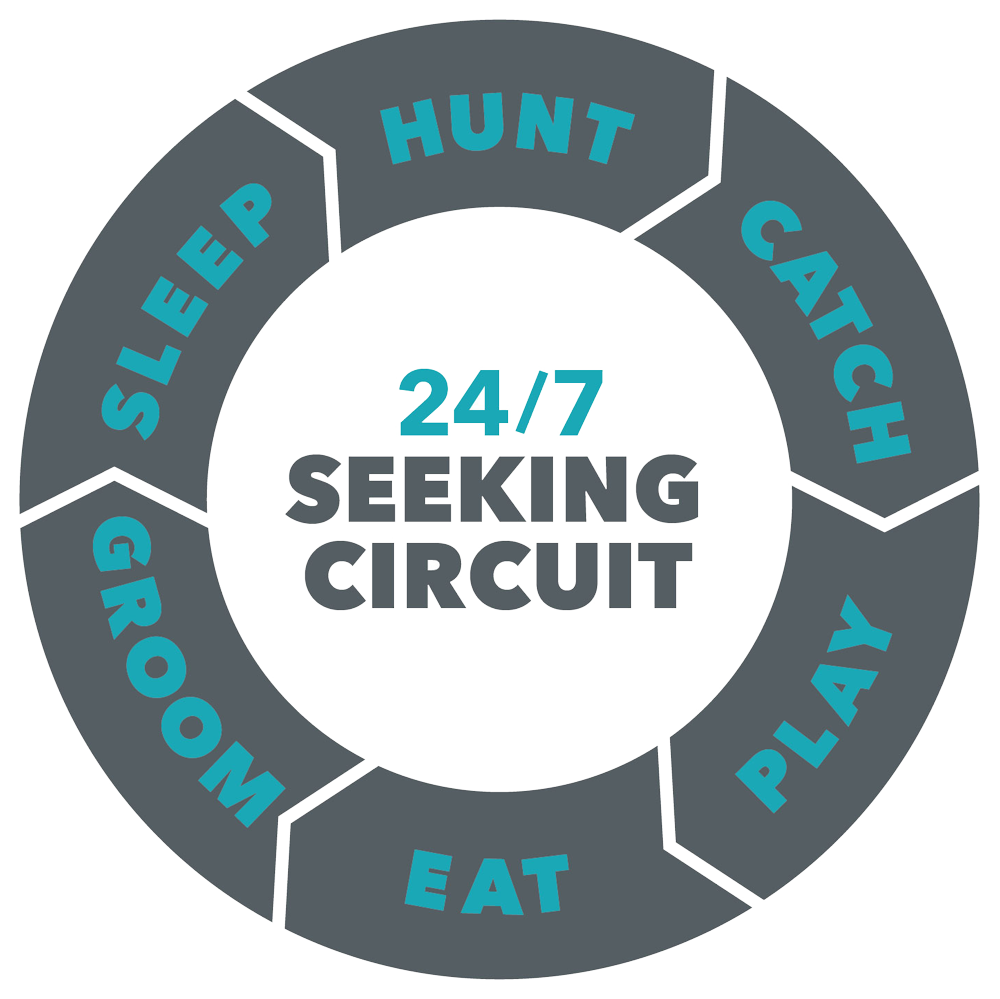 The Seeking Circuit