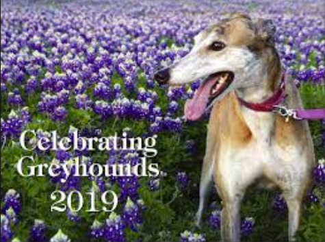 Celebrating Greyhounds - 2019 Wall Calendar