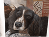 9″ x 9″ Custom Pet Oil Painting - True Best Friend