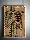 Creepy skeleton ribcage with bloody heart, gothic love artwork