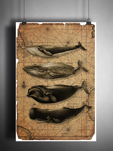 Whale art, vintage whale illustrations with vintage oceanic map background