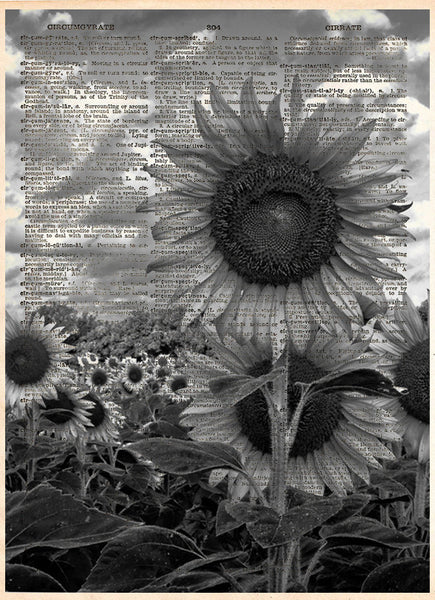 Black and white sunflower art, sunflower art print -