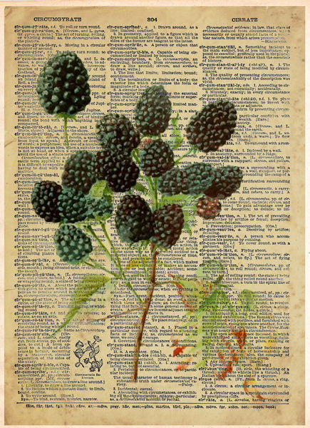 Blackberry vintage botanical art illustration, garden art, plant artwork