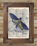 Insect illustration, death moth, butterfly art, dictionary art print -  - 2