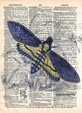 Insect illustration, death moth, butterfly art, dictionary art print -  - 1