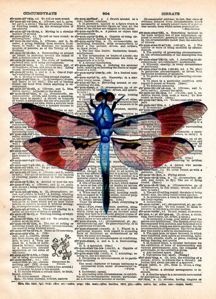 Dragonfly art, illustration 1800's,  dictionary page art -  - 1