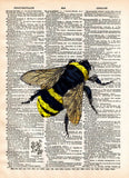 Bumblebee insect drawing, Bee art print,  dictionary page book art print -  - 1
