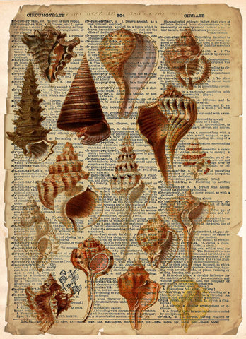 Sea shell art, beach house decor, vintage sea shell illustration