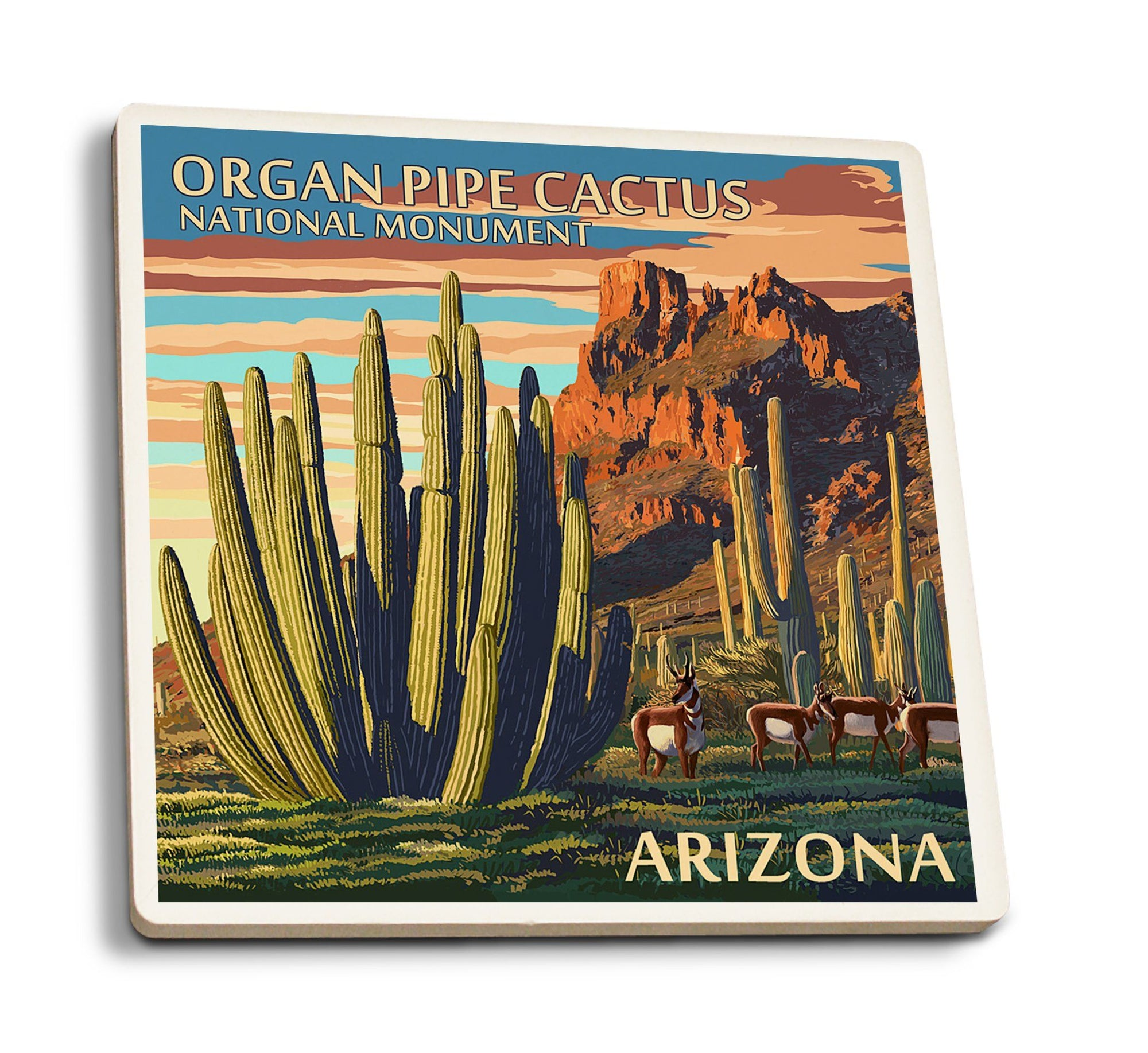 Coaster (Organ Pipe Cactus National Monument, Arizona - Lantern Press Artwork) Coaster Nightingale Boutique Coaster Pack