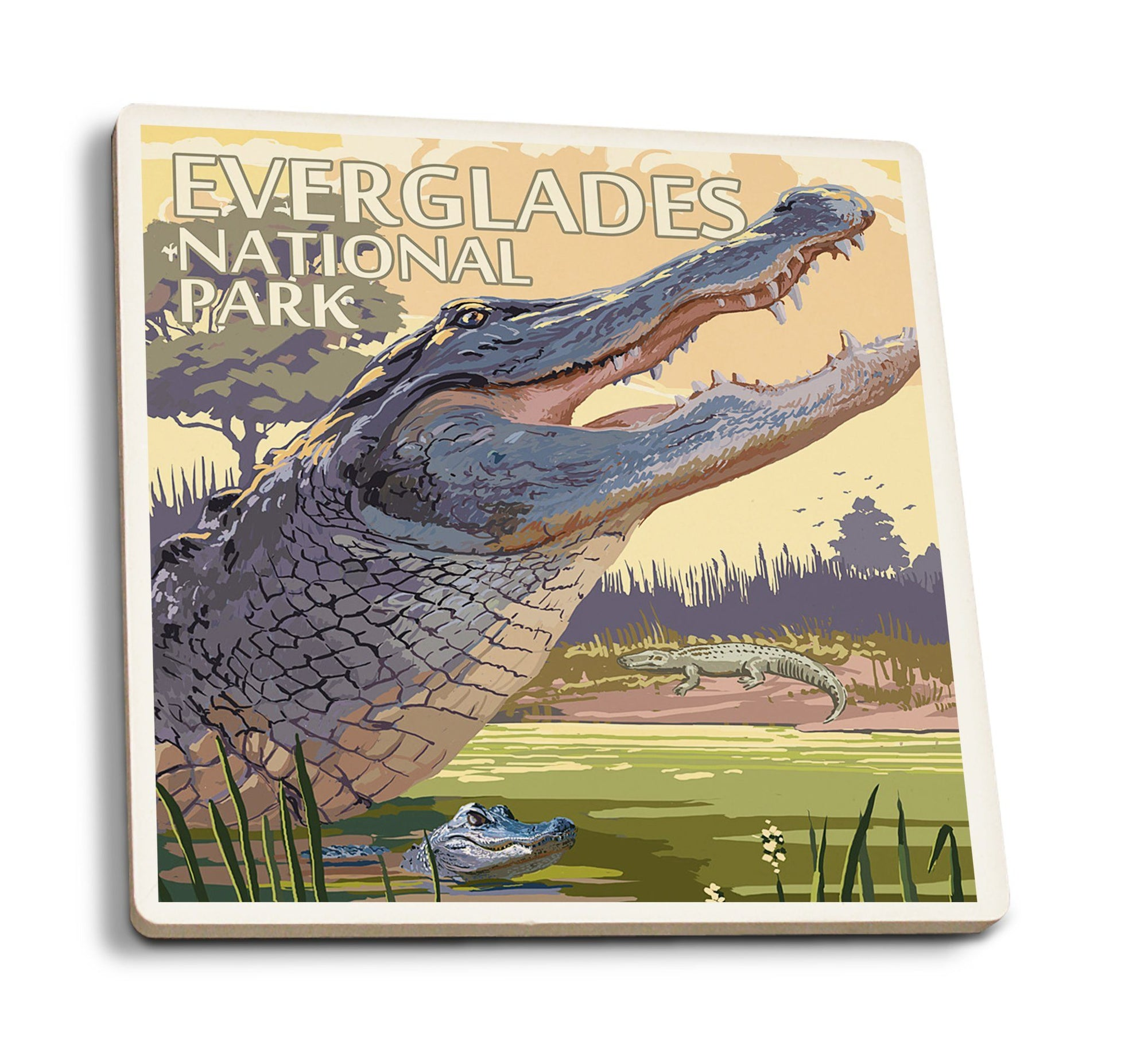 Coaster (The Everglades National Park, Florida - Alligator Scene - Lantern Press Artwork) Coaster Nightingale Boutique Coaster Pack