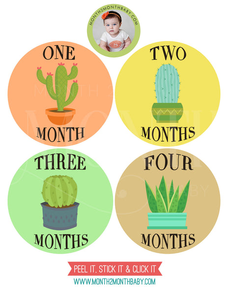 Set of 12 Month 2 Month Baby Cactus Collection Monthly Stickers