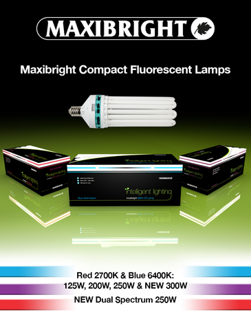 CFL Maxibright RED Bloom (Compact Fluorescent Lighting)