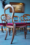 6 x Victorian Mahogany Ballon Backed Dining Chairs - erfmann-vintage