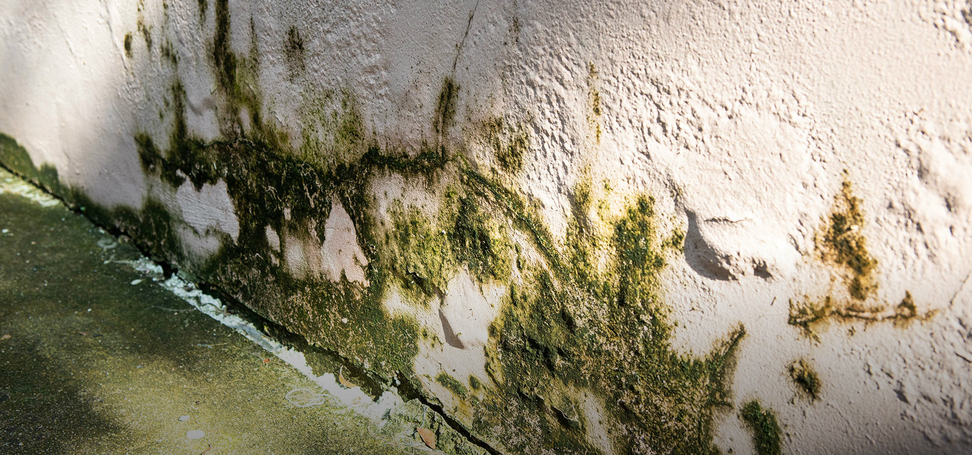 wet moldy foundation cement