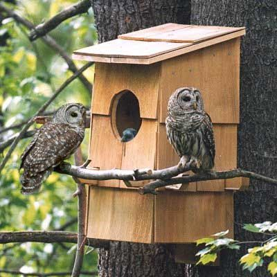 Owl Box House