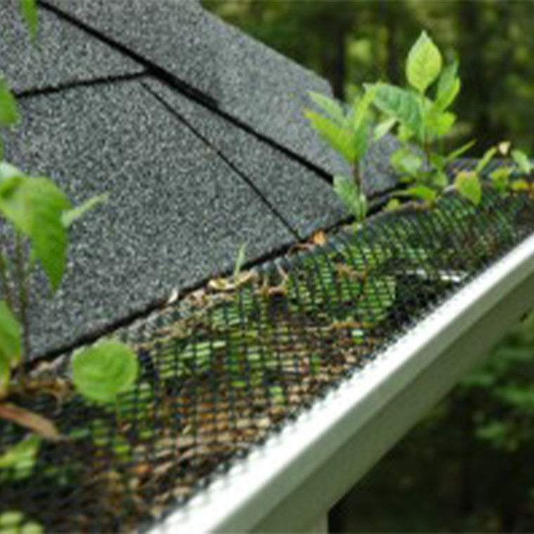 Gutter Screen With Plants Growing Through