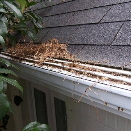 Gutter Cover Clogged With Pine Needles