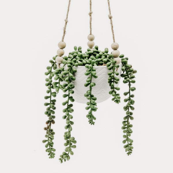 String Of Pearls Hanging Succulent