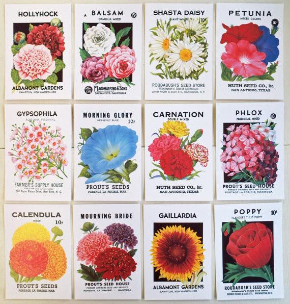 Vintage Seed Packet Post Cards | Pack of 12