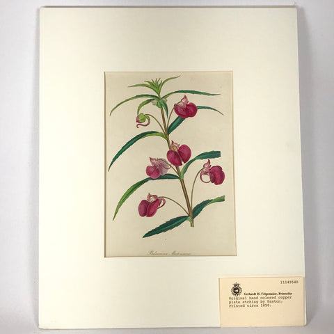 Original 1850 Paxton Hand Colored Copper Plate Etching Botanical Print