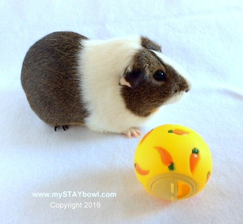 WHEEKY™ Treat Ball for GUINEA PIGS, RABBITS AND ALL SMALL PETS - www.MyStayBowl.com