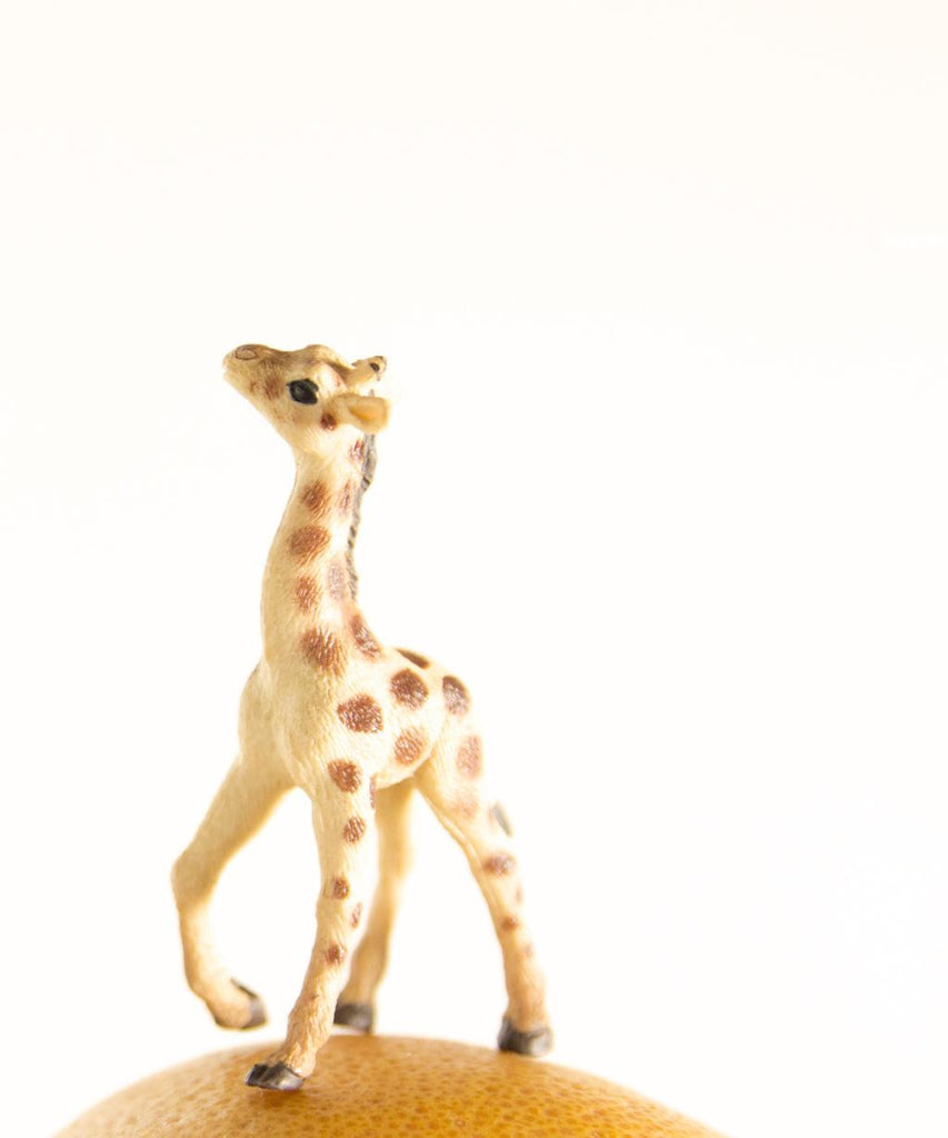 GRAPEFRUIT THE GIRAFFE
