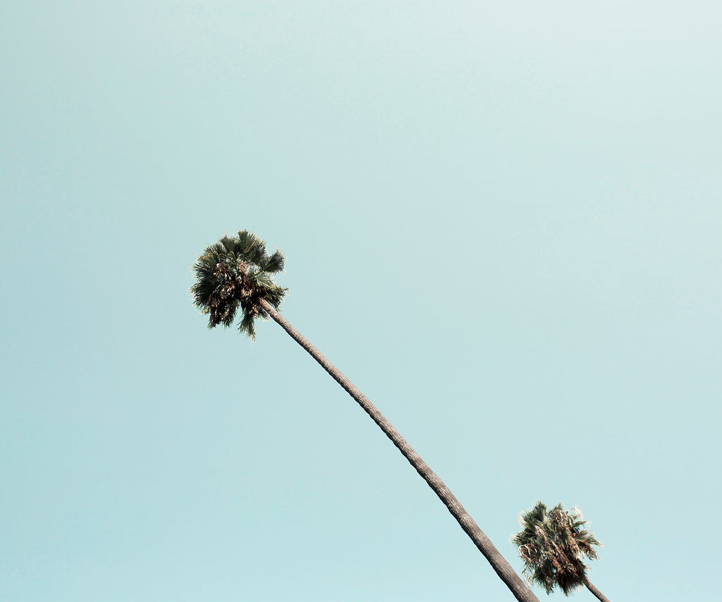 BEVERLY HILLS PALM