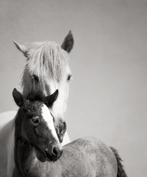 MARE AND FOAL CAMARGUE FRANCE