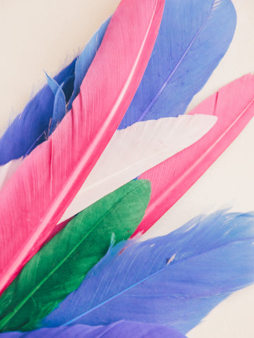 FEATHER OR NOT 10