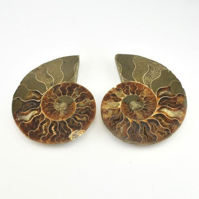 Fossil Ammonite Cut Polished Pair 3.5 Inch