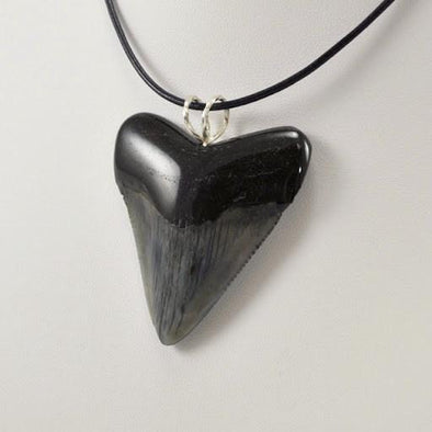 Sterling Silver Polished Megalodon Tooth Pendant